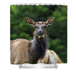 Elk Staring Closeup Portrait Shower Curtain