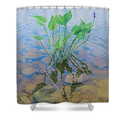 Ellie's Touch Shower Curtain by Pamela Clements