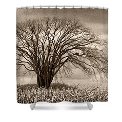 Elm Fortress Shower Curtain