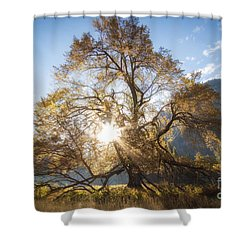 Elm Tree  Shower Curtain