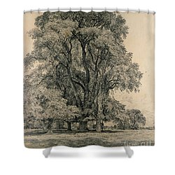 Elm Trees In Old Hall Park Shower Curtain by John Constable