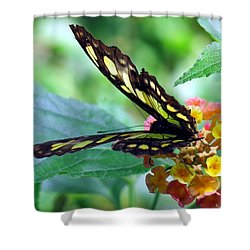 Elusive Butterfly Shower Curtain by Betty Buller Whitehead