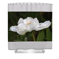 Embracing The Rain - White Tree Peony Shower Curtain by Gill Billington
