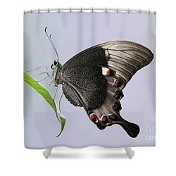 Emerald Peacock Swallowtail Butterfly V2 Shower Curtain