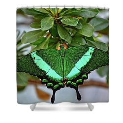 Emerald Swallowtail Butterfly Shower Curtain by Ronda Ryan