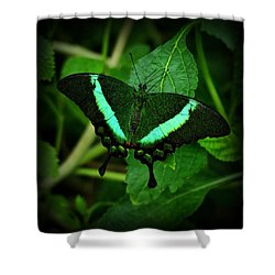 Emerald Swallowtail Shower Curtain
