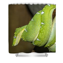 Emerald Tree Boa Shower Curtain