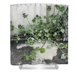 Emergence Shower Curtain by Kim Nelson