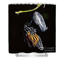 Shower Curtain featuring the photograph Emergent by Lew Davis
