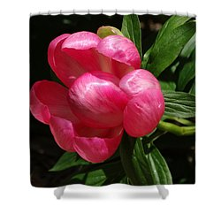 Shower Curtain featuring the photograph Emerging Peony Bloom by Rebecca Overton