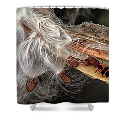 Emerging Seeds Shower Curtain by Phil Cardamone