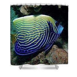 Emperor Angelfish, Red Sea 1 Shower Curtain