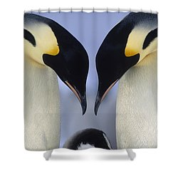 Shower Curtain featuring the photograph Emperor Penguin Family by Tui De Roy