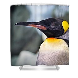 Emperor Penguin Shower Curtain
