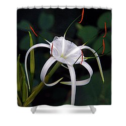 En Pointe Shower Curtain