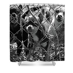 Encarcelados Chihuahuas Shower Curtain by DigiArt Diaries by Vicky B Fuller