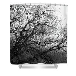 Shower Curtain featuring the photograph Enchanted Forest by Ana V Ramirez