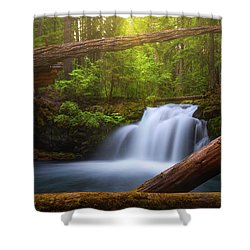 Shower Curtain featuring the photograph Enchanted Forest by Darren White