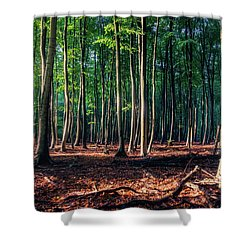 Shower Curtain featuring the photograph Enchanted Forest by Dmytro Korol