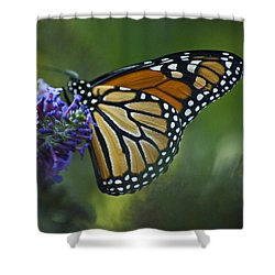 Shower Curtain featuring the photograph Enchanting Monarch by Elsa Marie Santoro