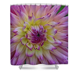 Enchantment Shower Curtain by Patricia Strand