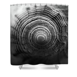End Of Conch Black And White Shower Curtain