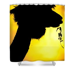 Shower Curtain featuring the photograph Endless Alpaca by TC Morgan