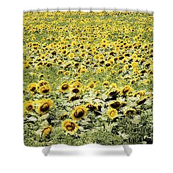 Endless Sunflowers Shower Curtain