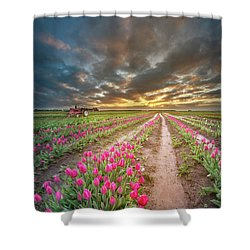 Shower Curtain featuring the photograph Endless Tulip Field by William Lee