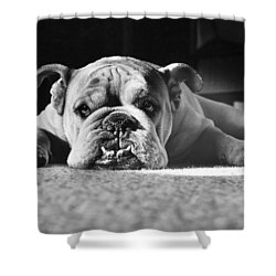 English Bulldog Shower Curtain by M E Browning and Photo Researchers