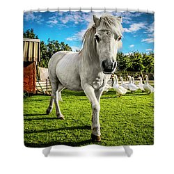 English Gypsy Horse Shower Curtain