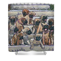 English Mastiff Puppies Shower Curtain by Nadi Spencer