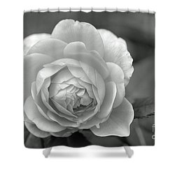 English Rose In Black And White Shower Curtain