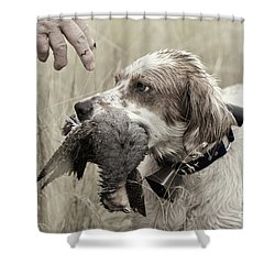 English Setter And Hungarian Partridge - D003092a Shower Curtain