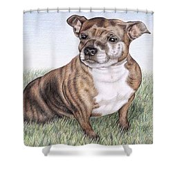 English Staffordshire Terrier Shower Curtain by Nicole Zeug