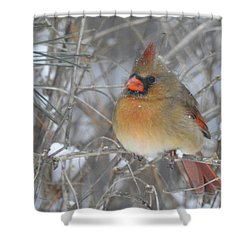 Enjoying The Snow Shower Curtain