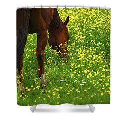 Shower Curtain featuring the photograph Enjoying The Wildflowers by Karol Livote