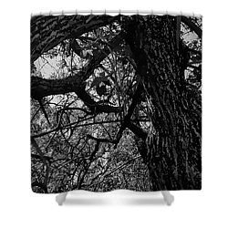 Enter The Woods In Black And White Shower Curtain