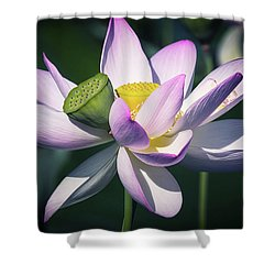 Shower Curtain featuring the photograph Entwined... by Cindy Lark Hartman