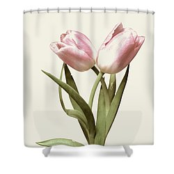 Entwined Tulips Shower Curtain by Jeannie Rhode