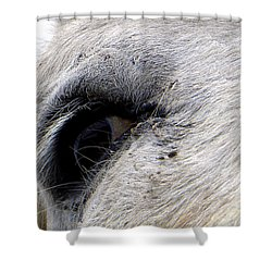 Shower Curtain featuring the photograph Equine Eye by Chris Mercer