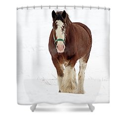 Shower Curtain featuring the photograph Equus Caballus.. by Nina Stavlund
