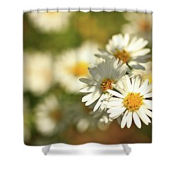 Erigeron Annuus Daisy Like Wildflower Shower Curtain