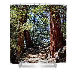 Shower Curtain featuring the photograph Ernie Maxwell Scenic Trail - Idyllwild by Glenn McCarthy