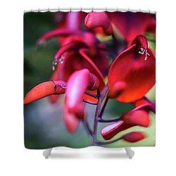 Shower Curtain featuring the photograph Erythrina Crista Galli Flower Spain Square Cadiz Spain by Pablo Avanzini