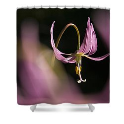 Erythronium Revolutum -365-35 Shower Curtain by Inge Riis McDonald