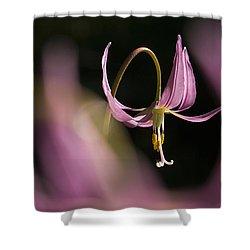 Erythronium Revolutum -365-35 Shower Curtain