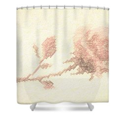 Shower Curtain featuring the photograph Etched Red Rose by Linda Phelps