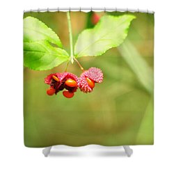 Euonymus Americanus  American Strawberry Bush Shower Curtain