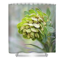 Shower Curtain featuring the photograph Euphorbia by Linda Lees